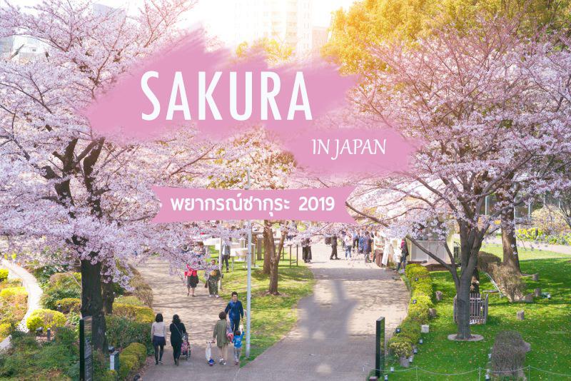 พยากรณ์ซากุระ ญี่ปุ่น 2019 เที่ยวฤดูใบไม้ผลิ