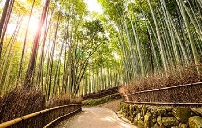 ทัวร์ญี่ปุ่น  GOAL JAPAN GRAND KYOTO KUROBE TOKYO