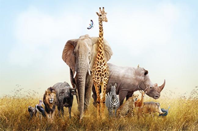 ทัวร์เคนย่า The Great Kenya Safari