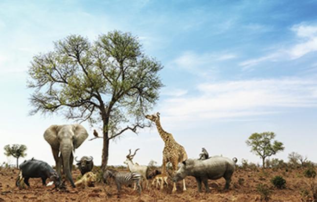 ทัวร์แอฟริกา South Africa Paradise