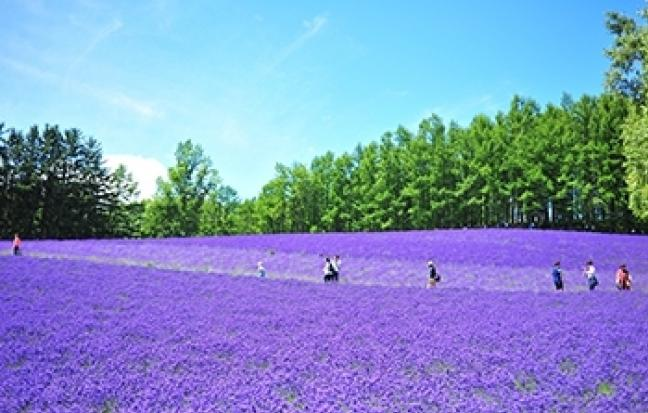 ทัวร์ญี่ปุ่น HAPPY HOKKAIDO โลกสวย ปี 3