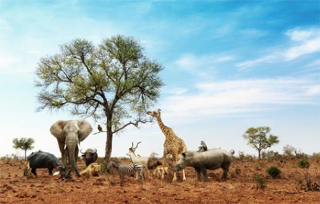 ทัวร์แอฟริกา เคนย่า - แทนซาเนีย