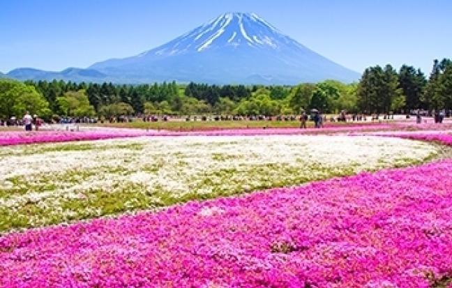 ทัวร์ญี่ปุ่น TOKOYO STRONGPINKMOSS