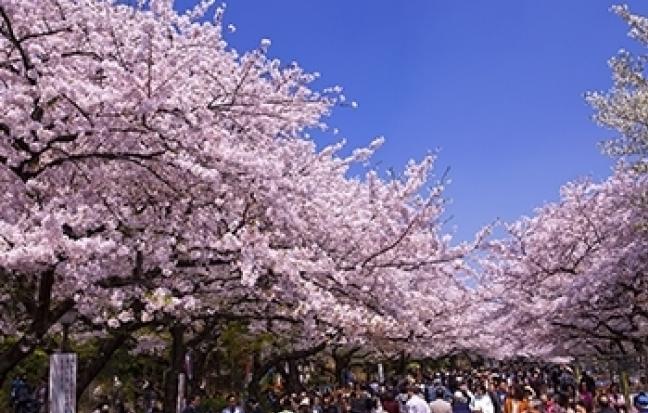 ทัวร์ญี่ปุ่น Pinkmoss Festival Tokyo Fuji Pinkmoss