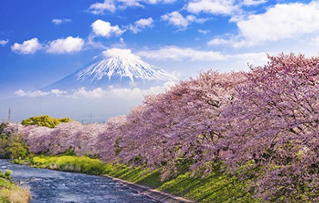 ทัวร์ญี่ปุ่น โตเกียว ฟูจิ นาริตะ อิบารากิ