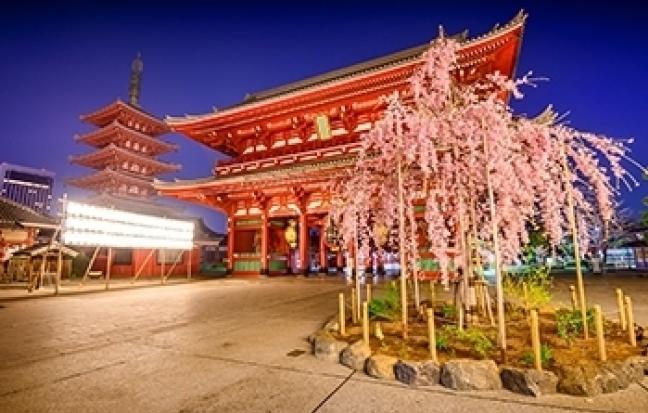 ทัวร์ญี่ปุ่น TOKYO FUJI SAKURA
