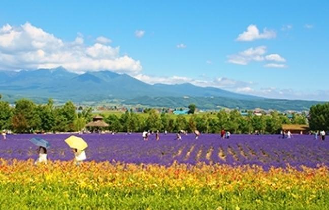 ทัวร์ญี่ปุ่น GOAL JAPAN GRAND HOKKAIDO FLOWER