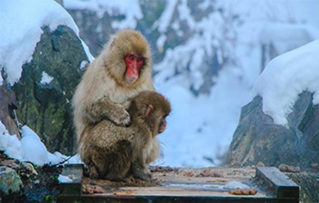 ทัวร์ญี่ปุ่น OSAKA  NAGOYA SNOW MONKEY  NEW YEAR