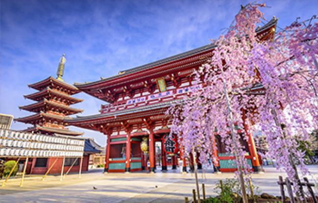 ทัวร์ญี่ปุ่น TOKYO BLOOM BLOSSOM