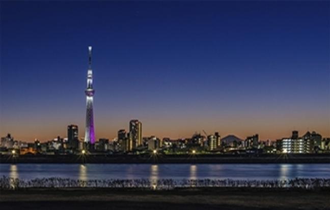 ทัวร์ญี่ปุ่น PRO TOKYO BLOSSOM SAKURA