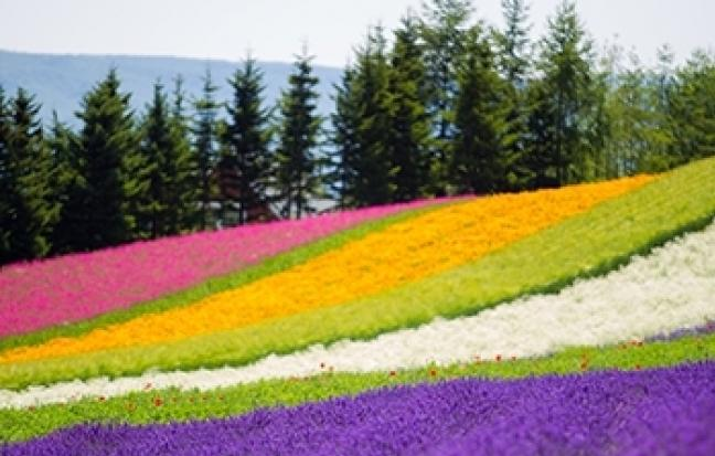 ทัวร์ญี่ปุ่น GRAND HOKKAIDO FLOWER TOMAMU
