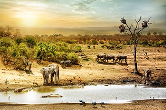 ทัวร์แอฟริกา MEET THE BIG FIVE IN SOUTH AFRICA