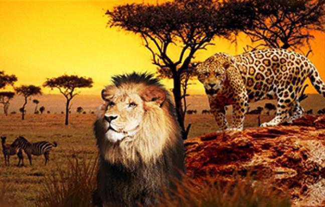 ทัวร์แอฟริกา แกรนด์โมรอคโค 11 วัน