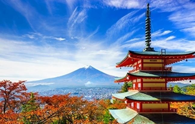 ทัวร์ญี่ปุ่น TOKYO FUJI ซุปตาร์ ลาเวนเดอร์ บานฉ่ำ