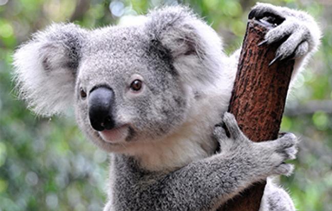 ทัวร์ออสเตรเลีย BW...HAPPY AUSTRALIA