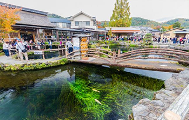 ทัวร์ญี่ปุ่น TOKYO FUJI  ซุปตาร์ PINKMOSS โลกอมชมพู