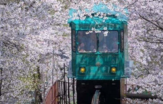 ทัวร์ญี่ปุ่น โตเกียว ชิบะ ฟูจิ คามาคุระ Spring KANTO