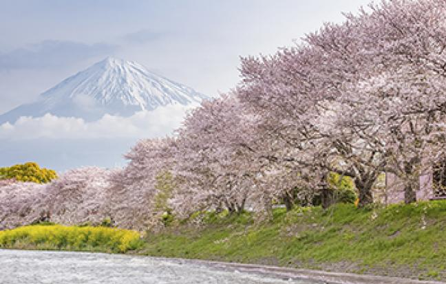 ทัวร์ญี่ปุ่น CHERRY BLOSSOM TAKAYAMA FUJI TOKYO