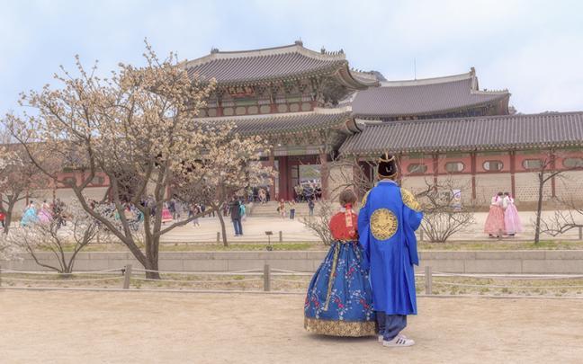 ทัวร์เกาหลี  Korea Cherry Blossom เกาหลี-ซูวอน-โซล