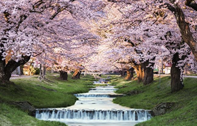 ทัวร์ญี่ปุ่น TOKYO SAKURA