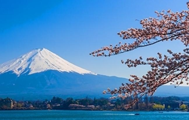 ทัวร์ญี่ปุ่น Sakura Festival Tokyo Fuji Sakura