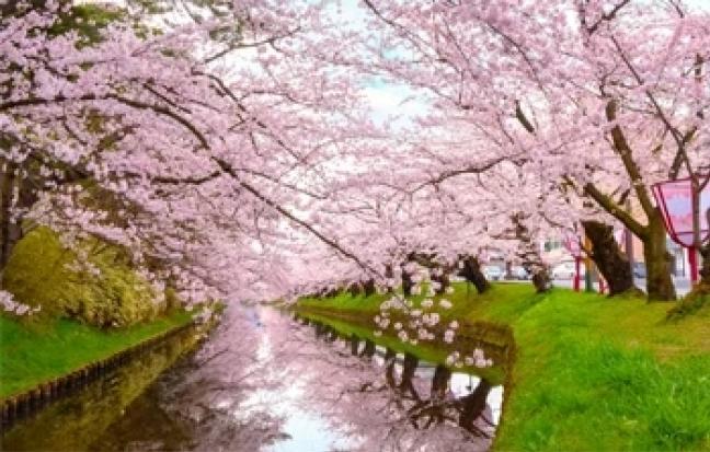 ทัวร์ญี่ปุ่น Sakura Tohoku Japan