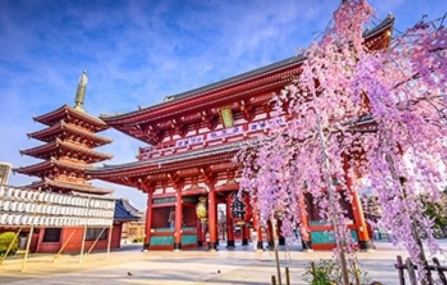 ทัวร์ญี่ปุ่น Pink Moss Wisteriaโตเกียว ฟูจิ พิงค์มอส วิสทีเรีย